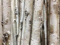 白色树干背景行  免版税库存照片