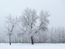 白色树荫  图库摄影