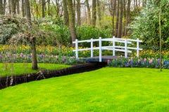 白色桥梁和五颜六色的花在荷兰春天庭院Keukenhof,荷兰里开花 免版税图库摄影