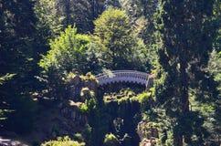 白色桥梁在森林里 图库摄影