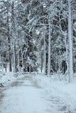 白色森林 图库摄影