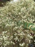 白色植物群 库存图片