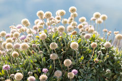 白色植物 免版税库存照片