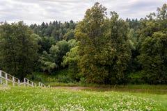 白色楼梯去森林 免版税库存图片