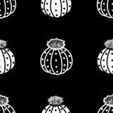 白色概述&黑色平面多汁植物和白色多汁植物 库存例证