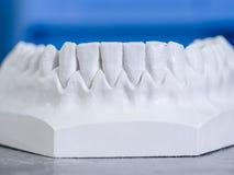 白色模子牙齿膏药 免版税图库摄影