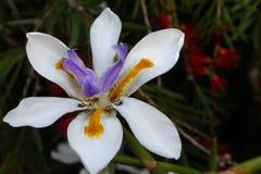 白色橙色紫色 图库摄影