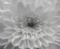 白色欢欣 库存照片