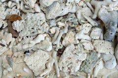 白色残破的死的珊瑚海滩自然背景在泰国海 图库摄影