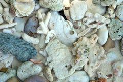 白色残破的死的珊瑚海滩自然背景在泰国海 免版税库存图片