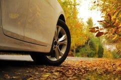 白色汽车和秋天 免版税库存图片