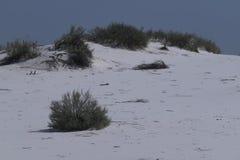 白色沙丘在新墨西哥 图库摄影