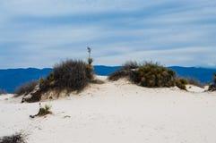 白色沙丘铺沙国家历史文物 库存图片