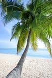 白色沙子偏僻的海滩,绿色棕榈树,蓝色海,明亮的晴朗的天空,白色云彩背景 免版税库存照片
