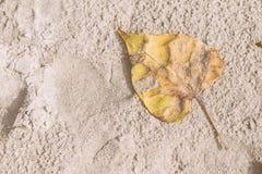 白色沙子和黄色干燥叶子在海滩在中午为了假期能放松背景 葡萄酒口气 泰国的海滩 免版税库存照片