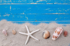 白色沙子星鱼和壳 库存图片
