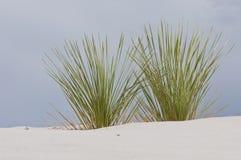 白色沙子,植被 库存图片