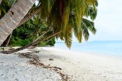白色沙滩用与棕榈树和绿叶- Vijaynagar, Havelock,安达曼尼科巴,印度的天蓝色的水 免版税库存照片