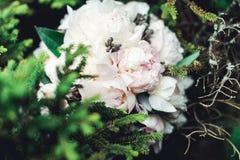 白色牡丹豪华新娘花束在具球果灌木的 免版税库存照片