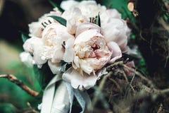 白色牡丹豪华新娘花束在具球果灌木的 图库摄影