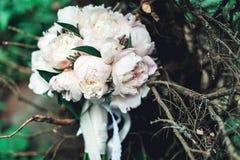 白色牡丹豪华新娘花束在具球果灌木的 库存照片