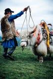 白色牦牛 库存照片