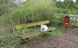 白色狗和垃圾桶在森林 免版税库存照片