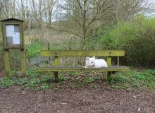 白色狗和垃圾桶在森林 库存图片