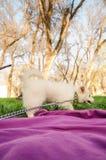 白色狗在公园 免版税库存图片