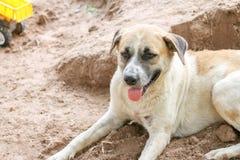 白色狗在地面上放置等待的朋友 当天气是热的时 免版税库存照片