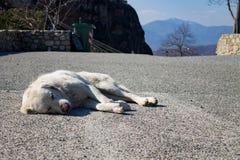 白色狗在柏油路和睡觉说谎在太阳下,在背景、垃圾和山中 免版税库存照片
