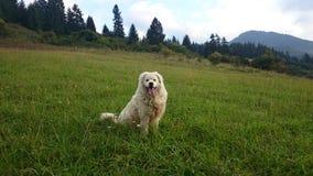 白色狗在美丽的乡下 免版税库存图片