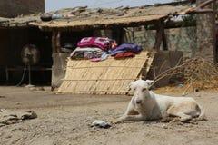 白色狗坐在一条多灰尘的村庄街道的,塔帕卡县 库存图片