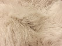 白色狗毛皮纹理 库存照片