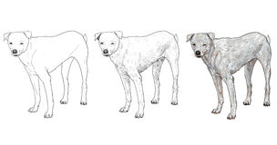 白色狗 库存照片