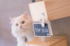 白色猫技巧箱子咖啡馆商店 免版税图库摄影