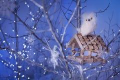 白色猫头鹰坐在树枝中的鸟舍 库存照片
