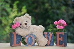 白色玩具熊在与桃红色玫瑰的爱石头说谎 库存图片