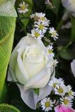白色玫瑰和雏菊。 免版税库存照片