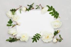白色玫瑰在浅灰色的背景开花,绿色从上面离开和干净的纸板料,美好的花卉样式,平的位置 免版税图库摄影