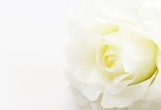 白色玫瑰在白色背景的伪造品花 库存图片