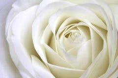 白色玫瑰宏指令风景 免版税库存照片