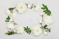 白色玫瑰框架从上面开花和在浅灰色的背景的叶子,美好的花卉样式,葡萄酒颜色,平展位置 免版税库存图片