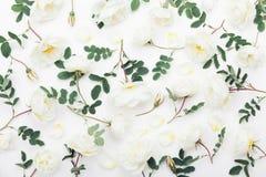 白色玫瑰色花和绿色叶子在白色桌上从上面 在平被放置的称呼的美好的花卉样式 免版税库存图片