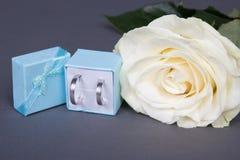 白色玫瑰花和婚戒在蓝色框在灰色 免版税库存照片