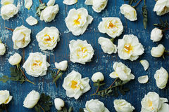 白色玫瑰花和绿色叶子在蓝色土气背景从上面 在葡萄酒颜色和平的位置的美好的花卉样式 免版税库存照片