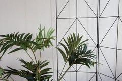 白色现代设计的,特写镜头背景议院植物 图库摄影
