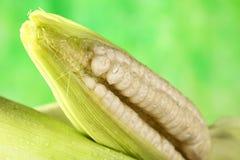 白色甜玉米玉米棒 免版税库存照片