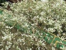 白色用花装饰 免版税库存图片
