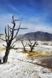白色的干燥地热湖 库存图片